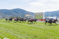 Horse Racing Hobart Tasmania Stock Photography