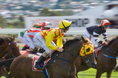 Horse Racing Hobart Tasmania Stock Photos