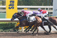 Horse Racing in Hong Kong - Sha Tin Racecourse Royalty Free Stock Photo