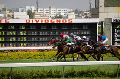 Horse racing in Hyderabad. HYDERABAD, ANDHRA PRADESH, INDIA - JANUARY 6: Jockeys and horses racing past the a display of the latest betting odds at the Hyderabad Stock Images
