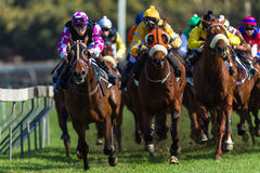 Horse Racing Jockeys Final Straight Stock Image
