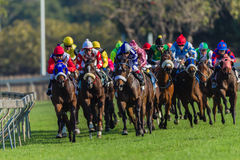 Horse Racing Jockeys Corner Rail Royalty Free Stock Photos
