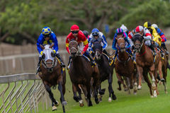 Horse Racing Jockeys Pacing  Stock Image
