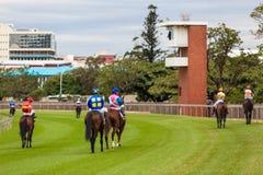 Horse Racing Jockeys Start Gates Royalty Free Stock Image