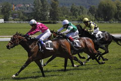 Horse racing - June Grand Prix in Prague Stock Image