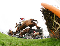 Horse Racing. Last at Cheltenham races 17-3-17 Royalty Free Stock Images