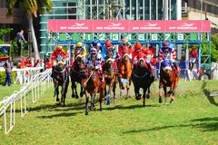 Horse racing in Mauritius. Horse racing starting block in Port Louis Mauritius royalty free stock images