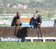 Horse Racing. Might bite 1st orenge-blk seen here at Cheltenham races 15-3-17 on the 2nd curcuit Stock Photo