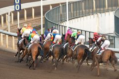 Horse Racing Royalty Free Stock Image