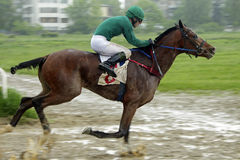 Horse racing in Nalchik Royalty Free Stock Image