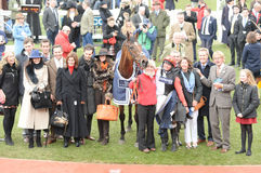 Horse Racing. Pacha du polder 1st red-blk-white seen here at Cheltenham races 17-3-17 Royalty Free Stock Images