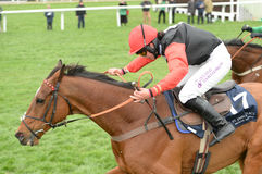 Horse Racing. Pacha du polder 1st red-blk-white seen here on the run in after jumping the last at Cheltenham races 17-3-17 Royalty Free Stock Photography
