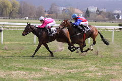 Horse racing in Prague 2011 - Gomba handicap Royalty Free Stock Images