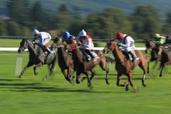 Horse racing in Prague 2012 Royalty Free Stock Photos
