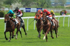 Horse racing in Prague Stock Image
