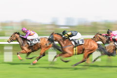 Horse racing in Prague - Chasinta and Mister Della Stock Photography