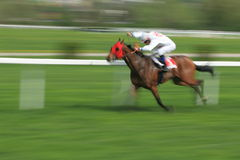 Horse racing in Prague - Dorotka horse Stock Photography