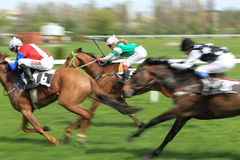 Horse racing in Prague - irish miracla and dabl Royalty Free Stock Image