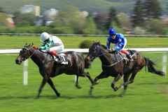 Horse racing in Prague - Jaroslav Masek memorial Stock Image