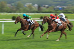 Horse racing in Prague - Kaptah Stock Image