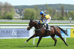 Horse racing in Prague - Madanpour Royalty Free Stock Photos