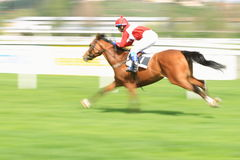 Horse racing in Prague - Narciska horse Royalty Free Stock Photos