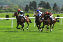 Horse racing in Prague - Prague MHD race Royalty Free Stock Photo