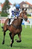 Horse racing in Prague - Rendez vous Stock Photography