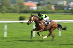 Horse racing in Prague - Romane conti Royalty Free Stock Image