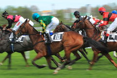 Horse racing in Prague - Sicilie, Sartina, Kaptah Stock Images