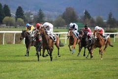 Horse racing in Prague Royalty Free Stock Photos