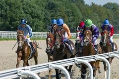 Horse racing for the prize of Budennogo in Pyatigorsk. stock photo