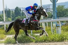Horse racing for the Prize of Comparison. royalty free stock photos
