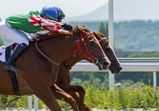 Horse racing for the prize of Ogranichitelni in Pyatigorsk. royalty free stock image
