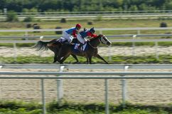 Horse racing in Pyatigorsk Royalty Free Stock Image