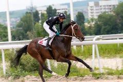 Horse racing in Pyatigorsk. Royalty Free Stock Images