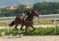 Horse racing in Pyatigorsk Royalty Free Stock Photography