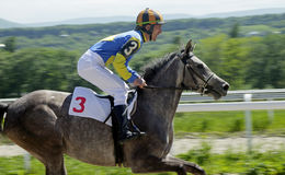 Horse racing in Pyatigorsk. Stock Photos