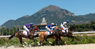 Horse racing. Royalty Free Stock Photography