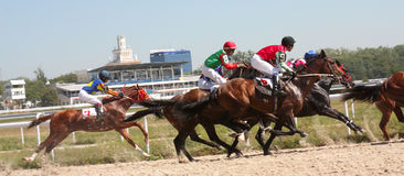 Horse racing. Royalty Free Stock Image