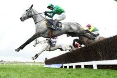 Horse Racing. 3rd last at Cheltenham races 17-3-17 Royalty Free Stock Photo