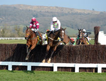 Horse Racing. Ruby Walsh and Vatour (light pink and green) win the 2:50 at Cheltenham races, 17-3-16 stock images