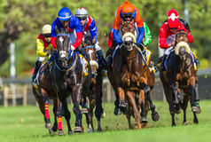 Horse Racing Running Action Royalty Free Stock Photo