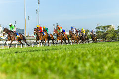Horse Racing Running Action Royalty Free Stock Image