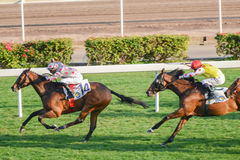 Horse racing in Shatian Royalty Free Stock Images
