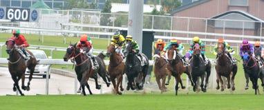 Horse racing sight Stock Photos