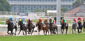 Horse racing sport Royalty Free Stock Photo