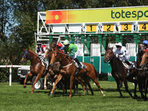 Horse racing start. The start of an Horse Race in the Royal Windsor Racecourse on 26 June 2011 royalty free stock photos