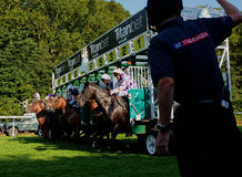 Horse racing. The start royalty free stock photos