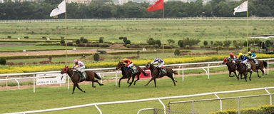 Horse Racing to finish. Horse Racing event in India, Pune royalty free stock photography